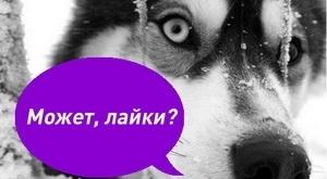 slovar-prv_300_auto_jpg